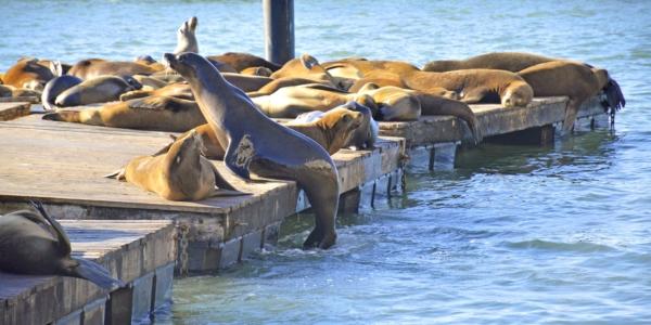 Pier 39 3 Seals